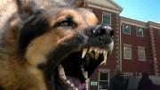 watchdog ico