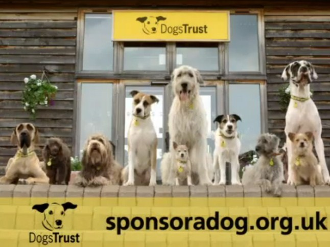 DogsTrust_DRTV_screengrab