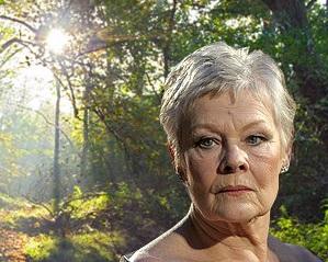 Dame Judi backs WWI tree fund