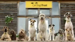 DogsTrust_DRTV_screengrab 1