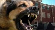 watchdog-ico2