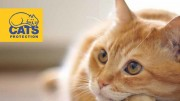 cats-helpline-1