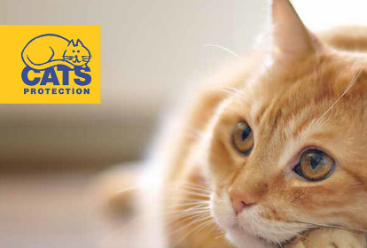 cats-helpline-2
