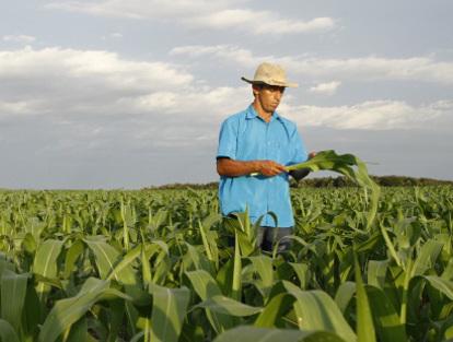 2-pic-man-in-corn-field