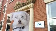ico_puppy