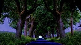 covid tunnel1