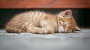 cat-1941089_1920